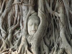 AYUTTAYAH - THAILANDE